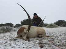 scimitar_horned_oryx_0147